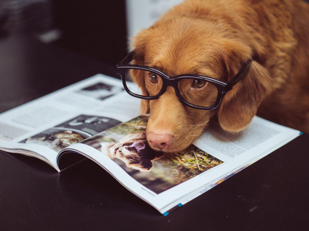 Implantación de Chips en Perros